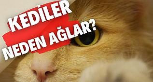 KEDİLER NEDEN AĞLAR? l Kedilerin Hisleri ve Duygu Geçişleri.