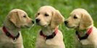 Her köpek kendine eşlik edecek oyun arkadaşı ister.