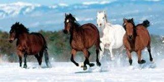 Atların Özgürce koşusu